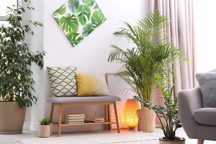 Simple home decor with indoor plants