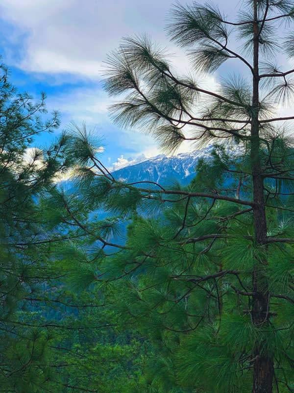 pines-kedarkantha-topcharted